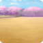 운동장 (벚꽃)