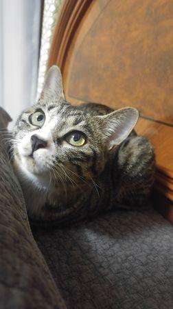 고양이 사진.jpg